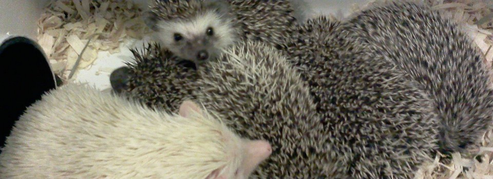 hedgehog group photo